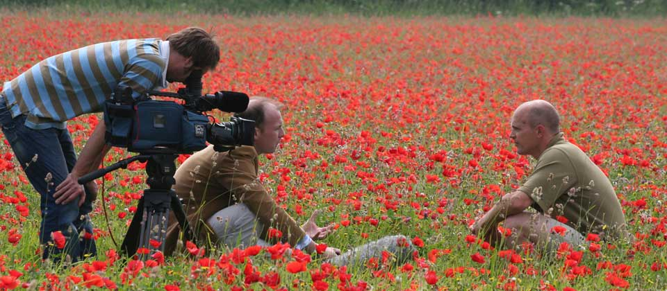 TV presentation in poppy field